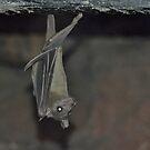 The Bat by Kathy Baccari