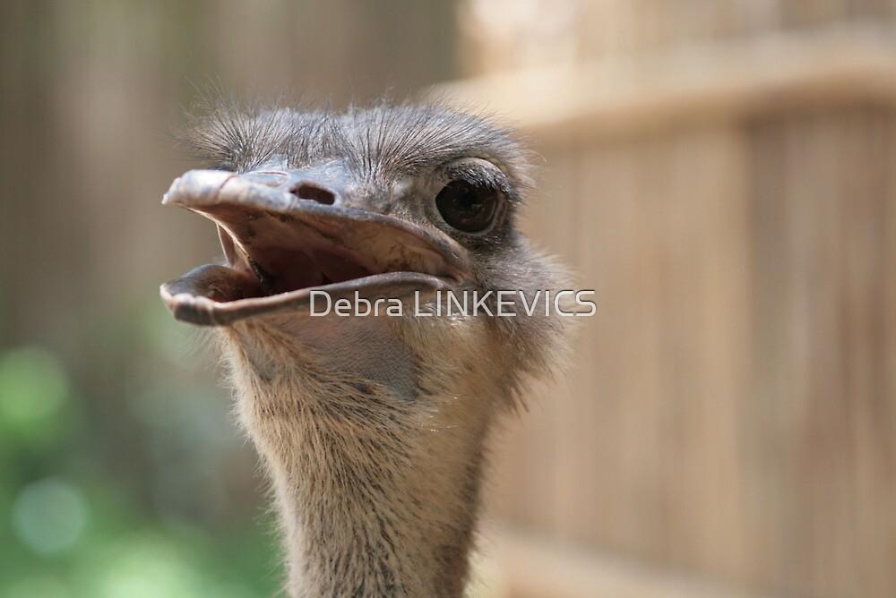 ~Emu~ by Debra LINKEVICS