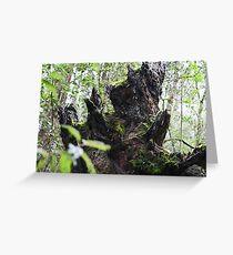 Forest Beast- Mt Field National Park, Tasmania Greeting Card