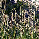 Grass! by Peter Doré