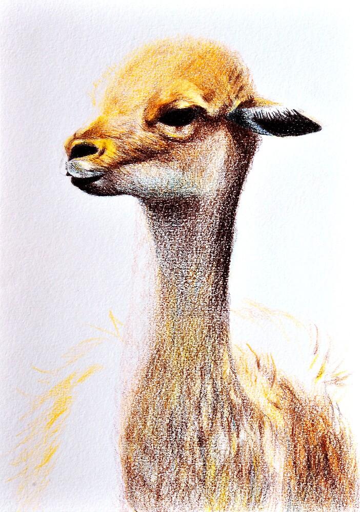 Lama by amira