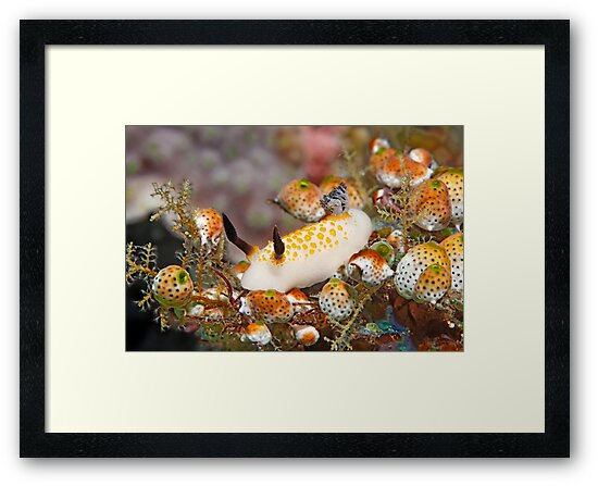 Nudis Paradise by Norbert Probst
