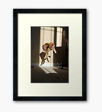 Ruh roh Framed Print