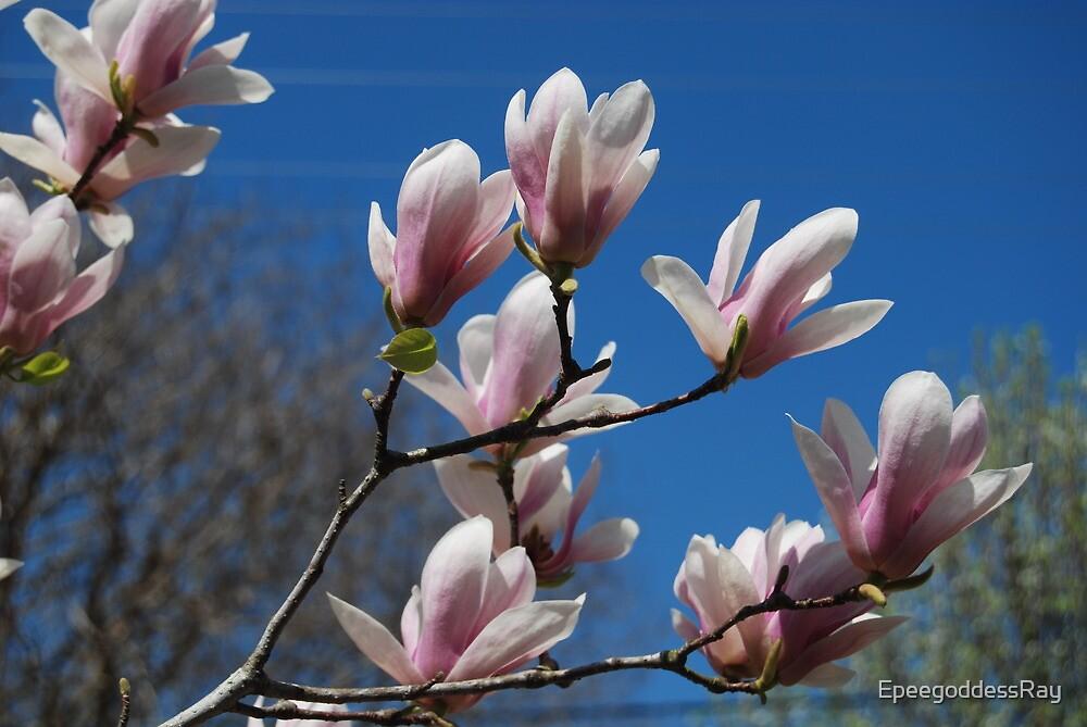 Tulip tree by EpeegoddessRay