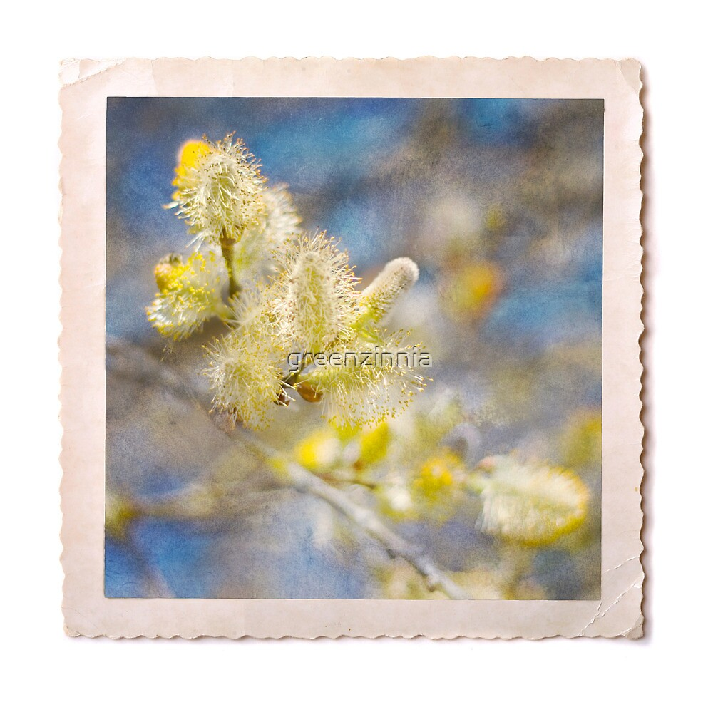 Blooming pussy willow in lemon and marine blue by greenzinnia