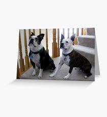 Boston Terriers Greeting Card