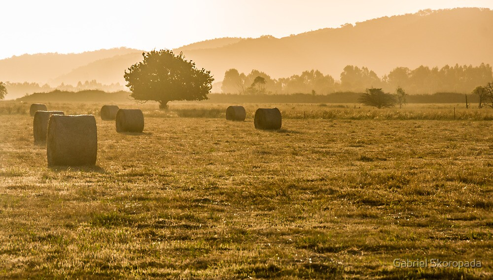 Afternoon in the Yarra Valley by Gabriel Skoropada