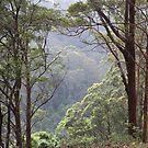 Australian Bush, Tallebudgera Valley, SE QLD. by aussiebushstick