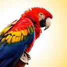 Scarlet Macaw by pixelman