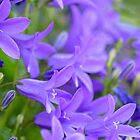 The colour purple by BenRobsonHull