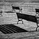 Shadows of Summer by Debra Fedchin