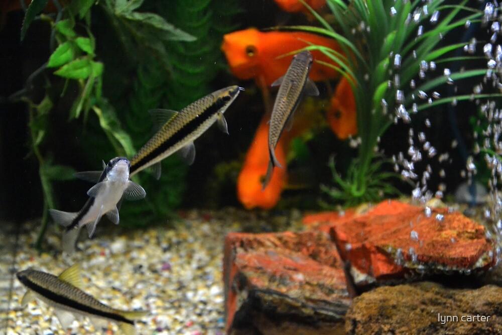 Fish Tank by lynn carter