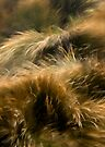 Wind and Grass by Alex Fricke