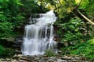 Ganoga Falls In Rickett's Glen by Gene Walls