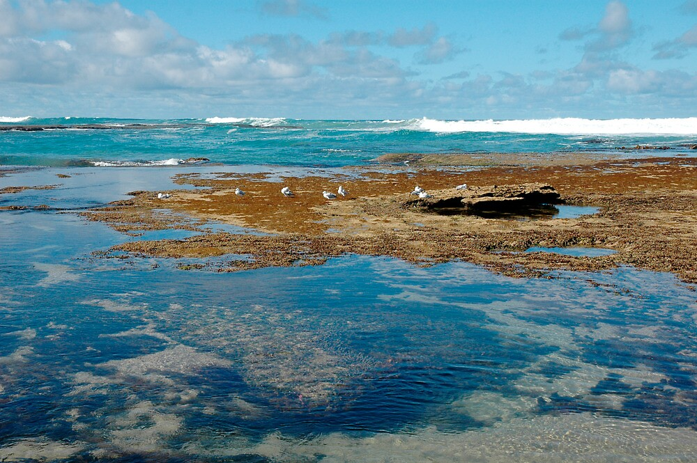 Seascape by Harry Oldmeadow