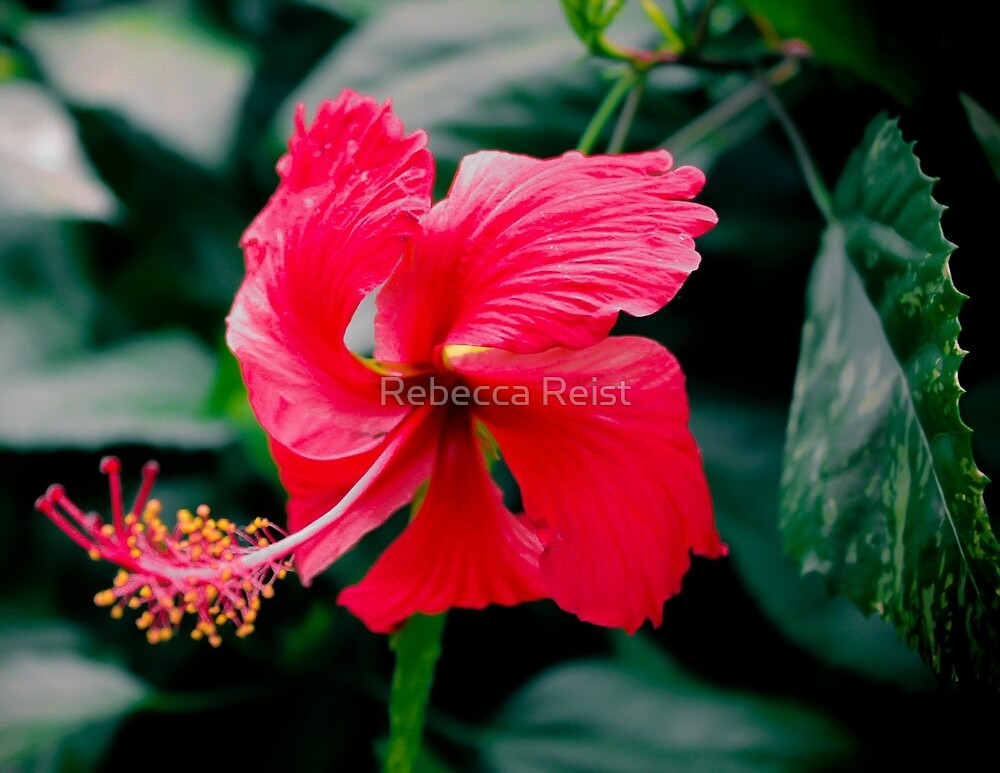 Pink Passion by Rebecca Reist