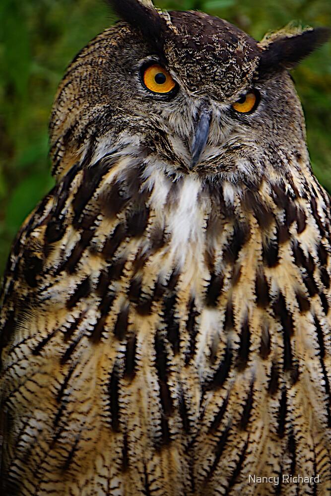 European or Eurasian Eagle Owl by Nancy Richard