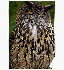 European or Eurasian Eagle Owl Poster