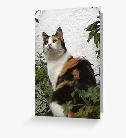 Clovelly Cat Greeting Card