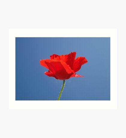 Red Against Blue Art Print