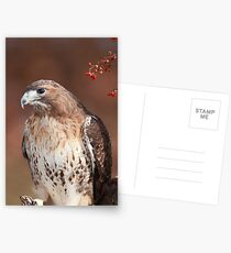 Red -Tailed Hawk ~ Postcards