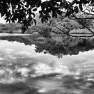 Raiforest reflections 2. by borjoz
