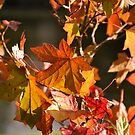 Autumn Colours pt5 by Lisa Williams