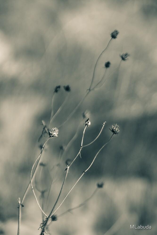 Time is fleeting -  Irwin Prairie Nature Preserve by MLabuda
