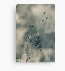 Time is fleeting -  Irwin Prairie Nature Preserve Metal Print