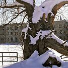 Winter Tree by Shulie1
