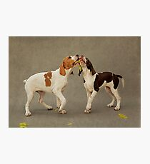 Puppies and a Feather Kiss Photographic Print