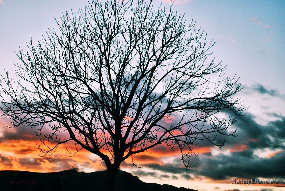 Colorful Sunset Tree by NancyC