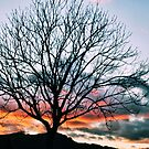 Colorful Sunset Tree by NancyC