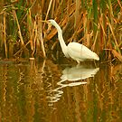 Reflections of a Heron by Michael Matthews