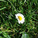 Daisy, Daisy by Sad-Robot