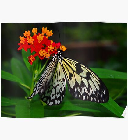 Rice Paper Poster