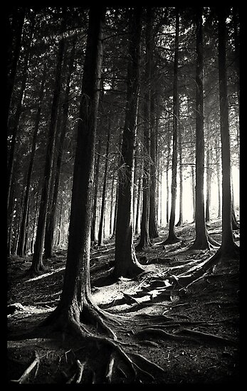 Bucknell Forest by seanusmaximus