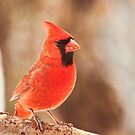 The early bird gets the seed by Penny Rinker