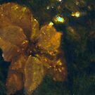 Golden Poinsettia by A.R. Williams