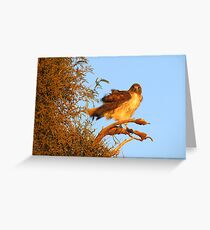 Red-tailed Hawk at Sunset Greeting Card