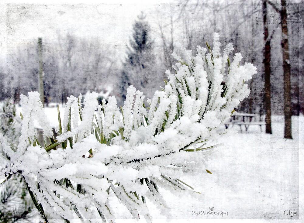 Snow-dipped pines by Olga