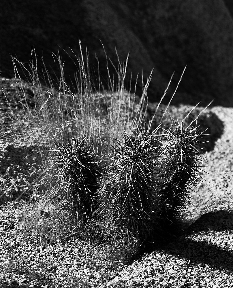 Joshua Tree IX by davidalf