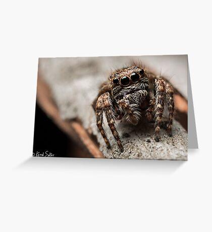(Servaea vestita) Jumping Spider #6 Greeting Card