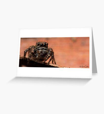 (Servaea vestita) Jumping Spider #7 Greeting Card