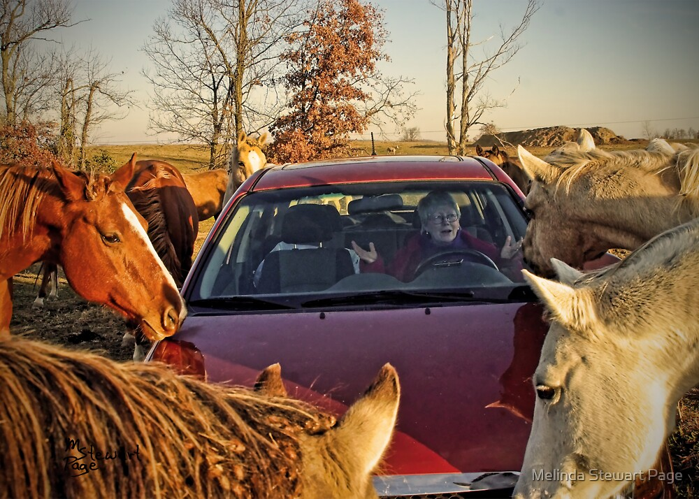 """""""No No, Not More Horses, More Horsepower!"""" by Melinda Stewart Page"""
