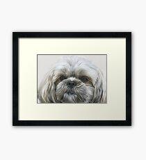 A Shaggy Dog Framed Print
