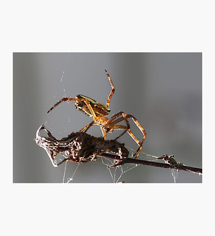 New Rodeo pursuit.. leg ropping spiders... Photographic Print