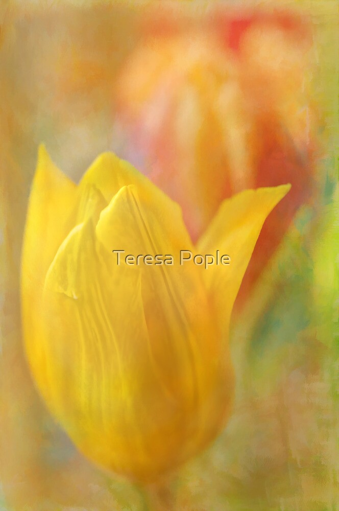 tantalising tulips by Teresa Pople