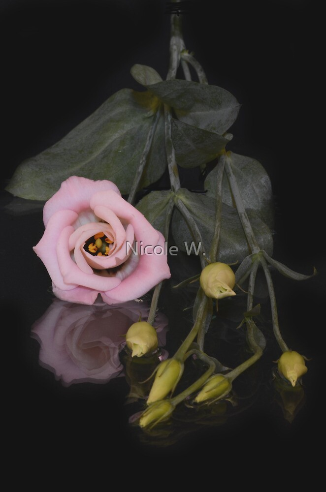 flower reflections IV by Nicole W.