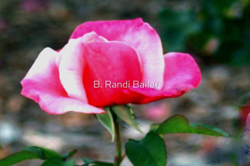 Pink duo by ♥⊱ B. Randi Bailey